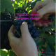 vino digitale Sorsi di web