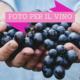 Foto per il vino, le immagini parlano della tua cantina