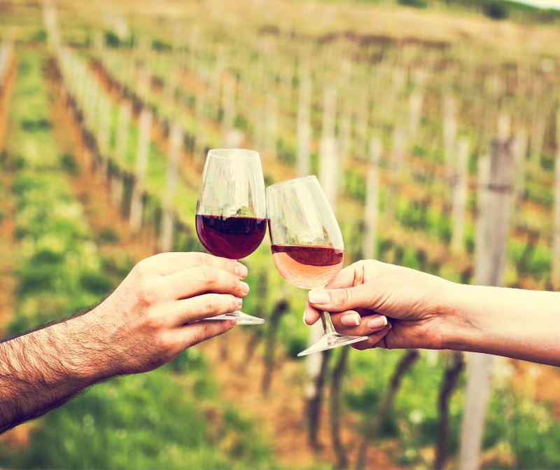 Export del vino Sorsi di web Selcru